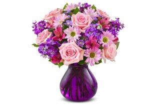 Lavender Dreams™ Shop Now