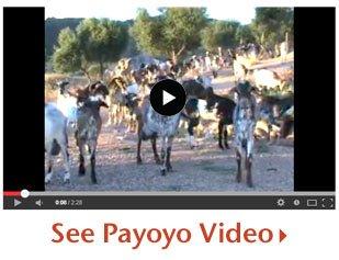 See Payoyo Video