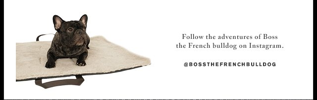 Follow the adventures of Boss the French bulldog - Shop Cloud7 for TUMI Now