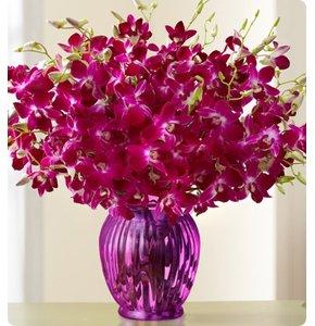 Exotic Breeze™ Orchids Shop Now