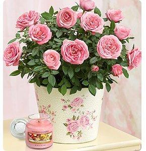 Classic Budding Rose Shop Now