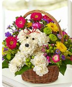 a-DOG-able® in a Basket Shop Now