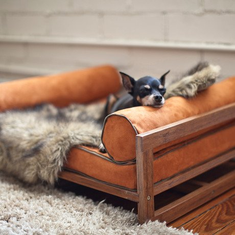 Aldo Pet Lounger // Rust Orange Cushion