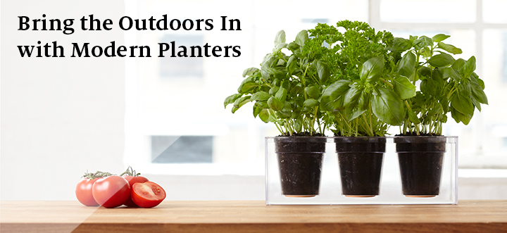 Bring the Outdoors In with Modern Planters