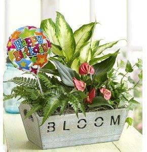 Happy Birthday Garden Shop Now