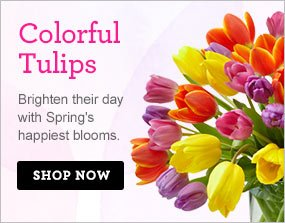Colorful Tulips Brighten their day with Spring's happiest blooms.  Shop Now