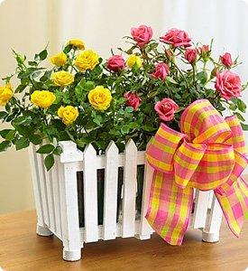Charming Rose Garden Shop Now