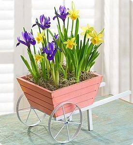 Lovely Wheelbarrow of Bulbs Shop Now