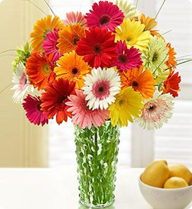 Happy Gerbera Daisies Shop Now