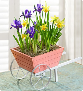 Lovely Wheelbarrow of Bulbs Shop Now