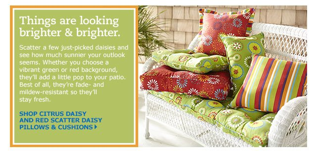 Shop our Citrus Daisy & Red Scatter Daisy Collection