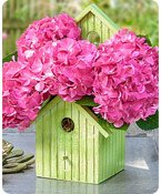 Bird House of Blooms® Shop Now