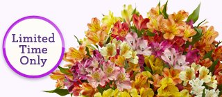 Deal of the Week 100 Blooms of Peruvian Lilies, just $29.99** While Supplies Last!  Limited Time Only!