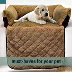 must-haves for you pet