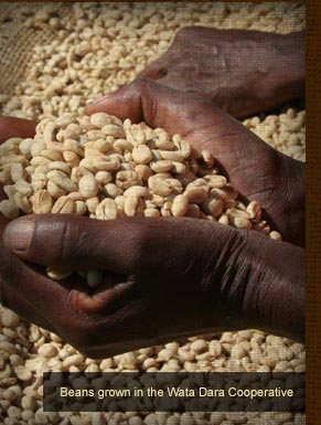Beans grown in the Wata Dara Cooperative