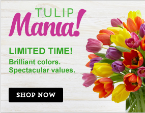 Tulip Mania! Brilliant colors. Spectacular values. Get them while they last!  Shop Now