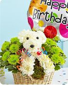 Party Animal™ Same-Day Local Florist Delivery Shop Now