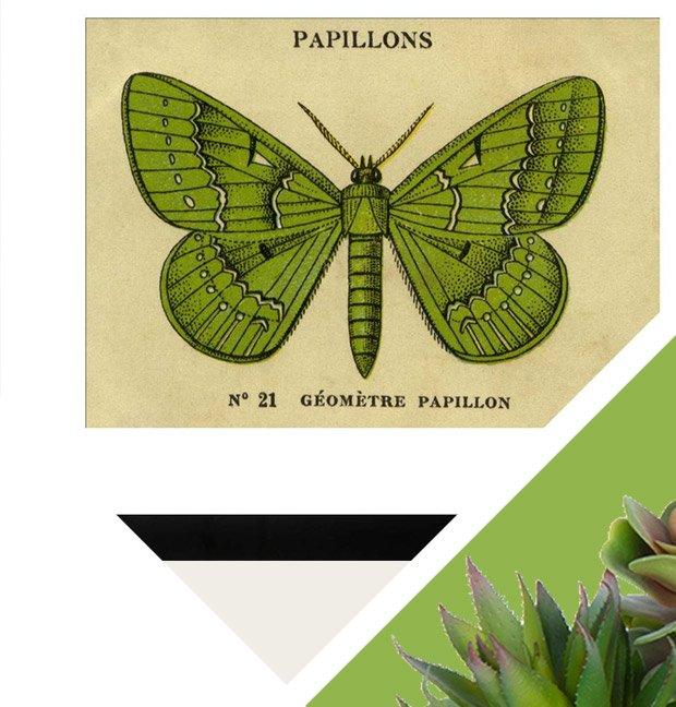 Butterflies Graphic Art