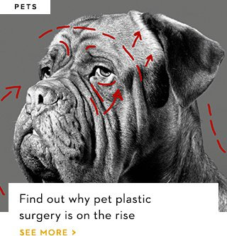 Find out why pet plastic surgery is on the rise