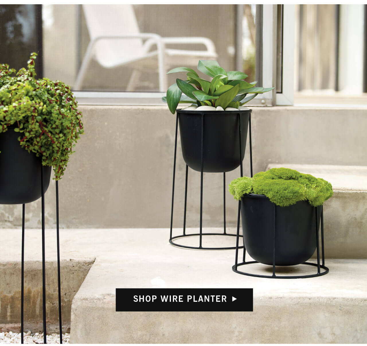 Shop Wire Planter