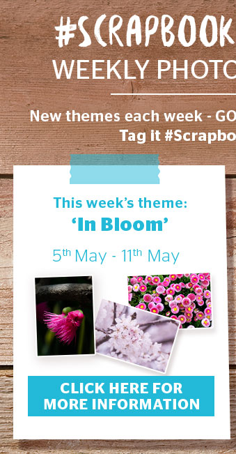 Srapbook Outdoors: In Bloom