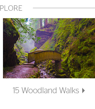 15 Woodland Walks