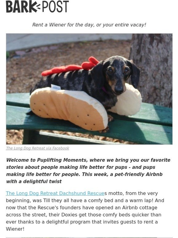 Barkbox: Would you like a little Wiener with your Airbnb