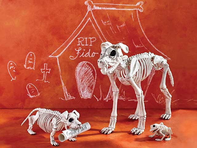 Save 20% Skeleton Animals ›