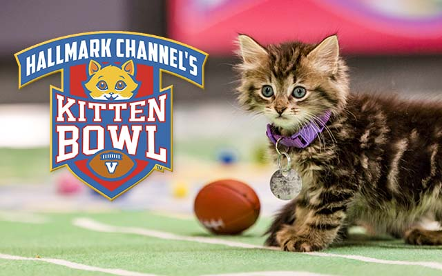 north shore animal league adopt a kitten bowl cat lete on saturday october 7th milled. Black Bedroom Furniture Sets. Home Design Ideas