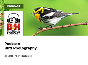 Podcast: Bird Photography by John R Harris