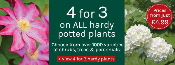 4 for 3 on all hardy potted plants