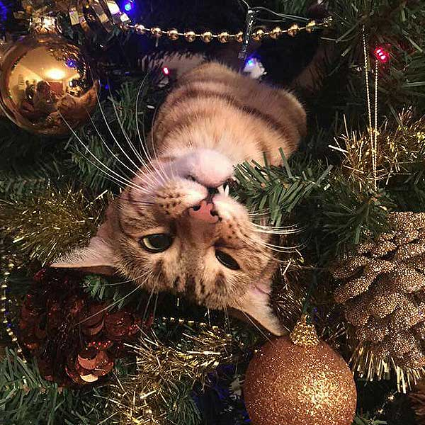 How To Keep Cats Off Christmas Trees.Modkat Cats Christmas Trees Milled