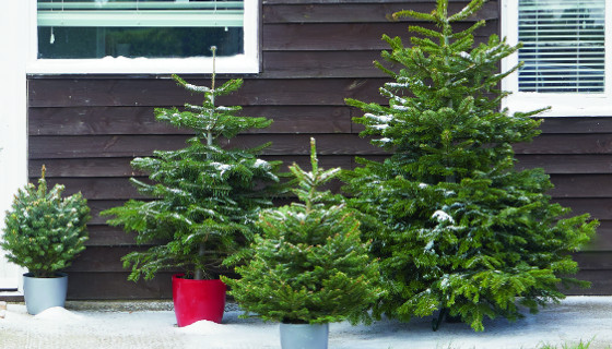 Homebase: New Price Drops On Christmas 🎄 Only While Stocks