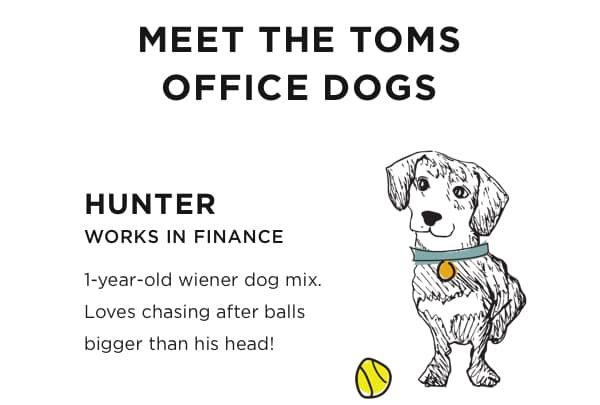 Meet The TOMS Office Dogs