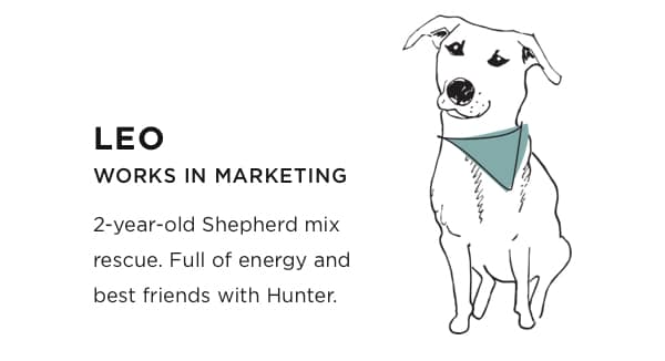 Leo: Works in Marketing. Two year old Shepherd mix rescue. Full of energy and best friends with Hunter.