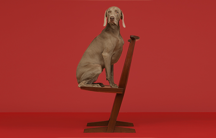 Year of the Dog at WallpaperSTORE*