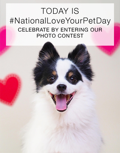 Share photos of your favorite pets with #FebPets for a chance to win $100 to GetOlympus.com!
