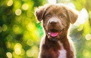 5 Tips for Successful Holistic Pet Care