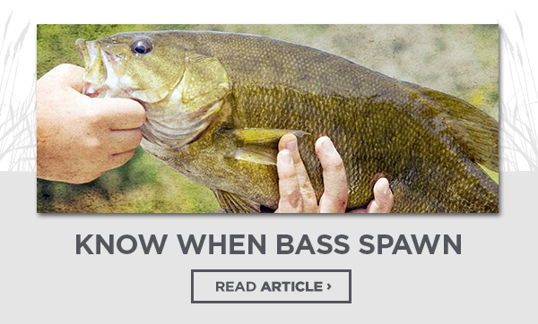 Know when bass spawn