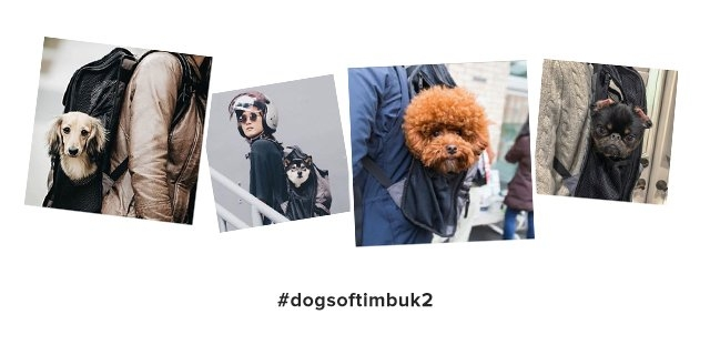#dogs of timbuk2