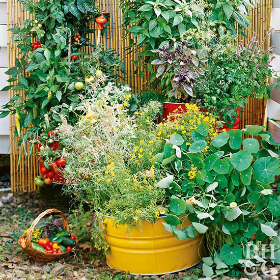 Better Homes and Gardens: Big Ideas for Tiny Gardens | Milled
