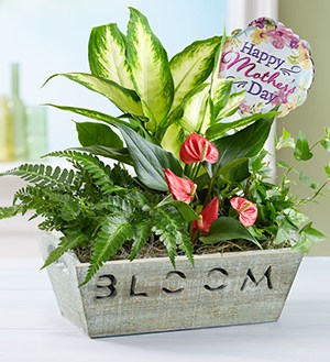 Bloom Dish Garden for Mom SHOP NOW