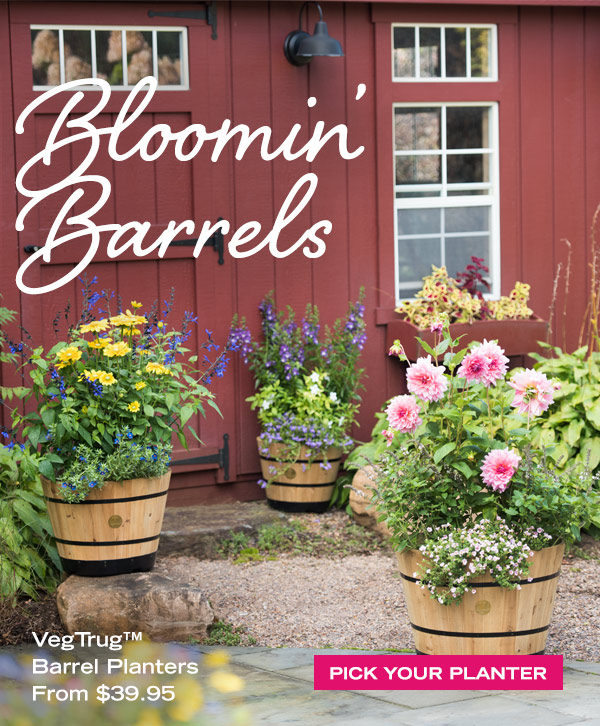 Bloomin' Barrels! VegTrug Barrel Planters from $39.95. Pick Your Planter!