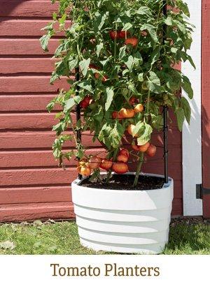 Shop Tomato Planters