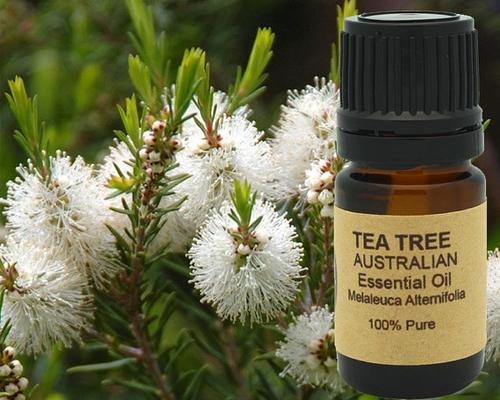 Image of Tea Tree Essential Oil (AAA Australian)