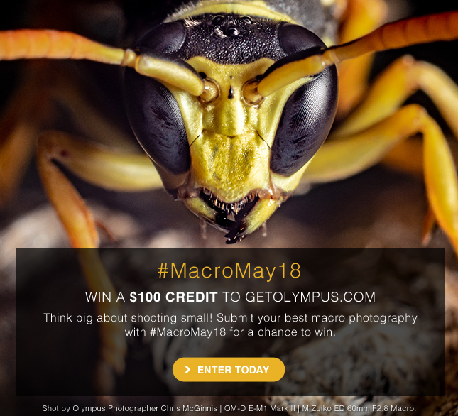 Think big about shooting small!  Submit your macro photography with #MacroMay18 for a chance to win.