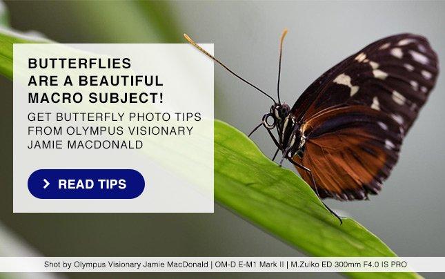BUTTERFLIES ARE A BEAUTIFUL MACRO SUBJECT! READ TIPS
