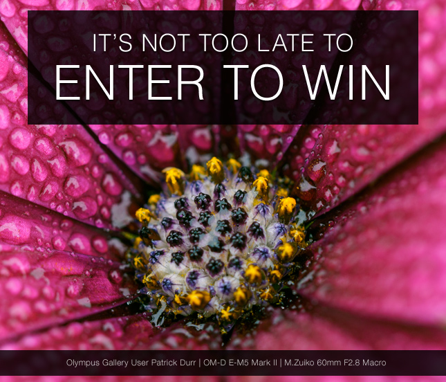 ITS NOT TOO LATE TO ENTER TO WIN