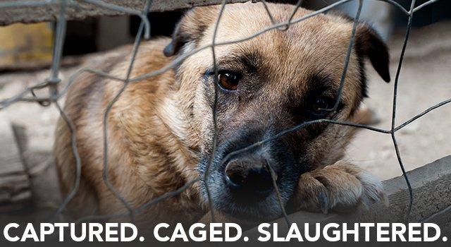 North Shore Animal League: June eNews: International Rescue