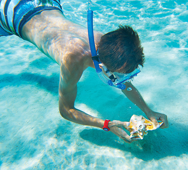 Image of a boy scuba diving underwater grabbing a shell - Click here to book now